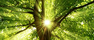 Un internet végétal... La nature nous enseigne encore et toujours.