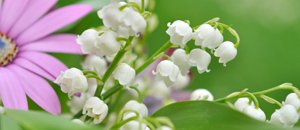 Joli mois de mai... Vie en rose et blanc !