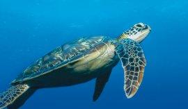 Naturine et Poralu Marine pensent aux générations futures...